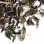 Белый чай Шоу Мэй, «Брови Старца» (Китай) 50г.